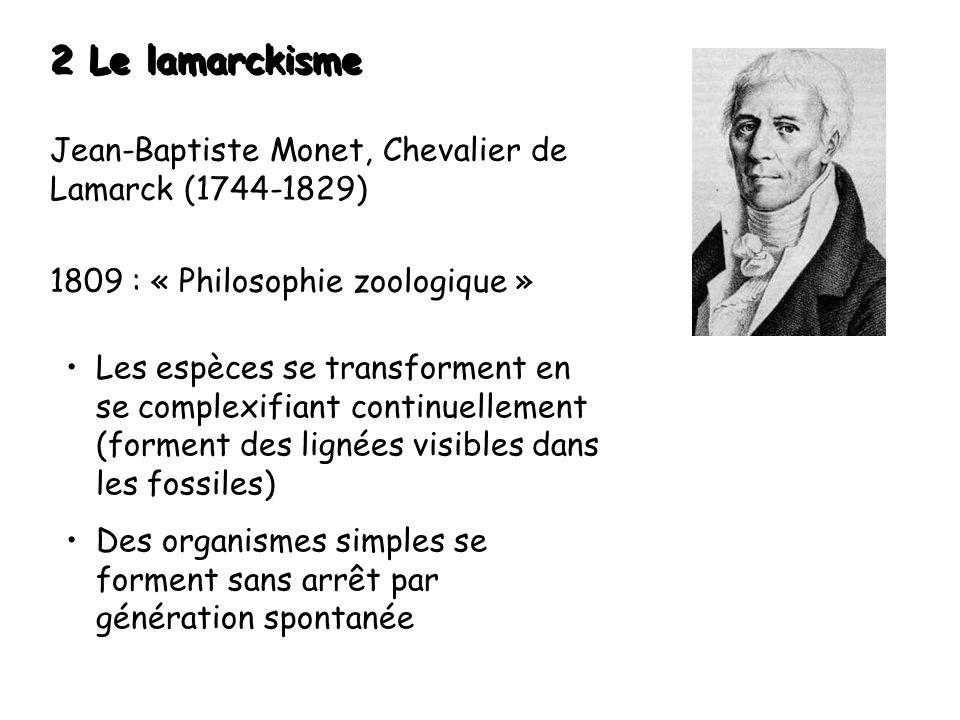 2 Le lamarckisme Jean-Baptiste Monet, Chevalier de Lamarck (1744-1829) 1809 : « Philosophie zoologique » Les espèces se transforment en se complexifiant continuellement (forment des lignées visibles dans les fossiles) Des organismes simples se forment sans arrêt par génération spontanée