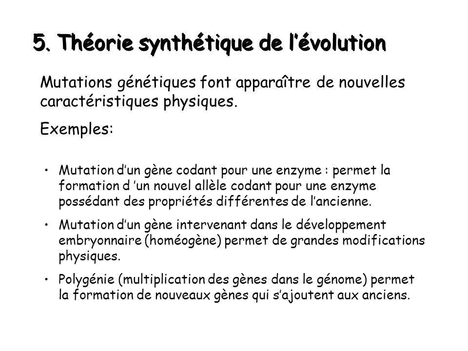 5. Théorie synthétique de l'évolution Mutations génétiques font apparaître de nouvelles caractéristiques physiques. Exemples: Mutation d'un gène codan