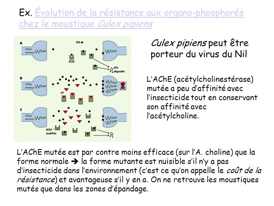 Ex. Évolution de la résistance aux organo-phosphorés chez le moustique Culex pipiensÉvolution de la résistance aux organo-phosphorés chez le moustique
