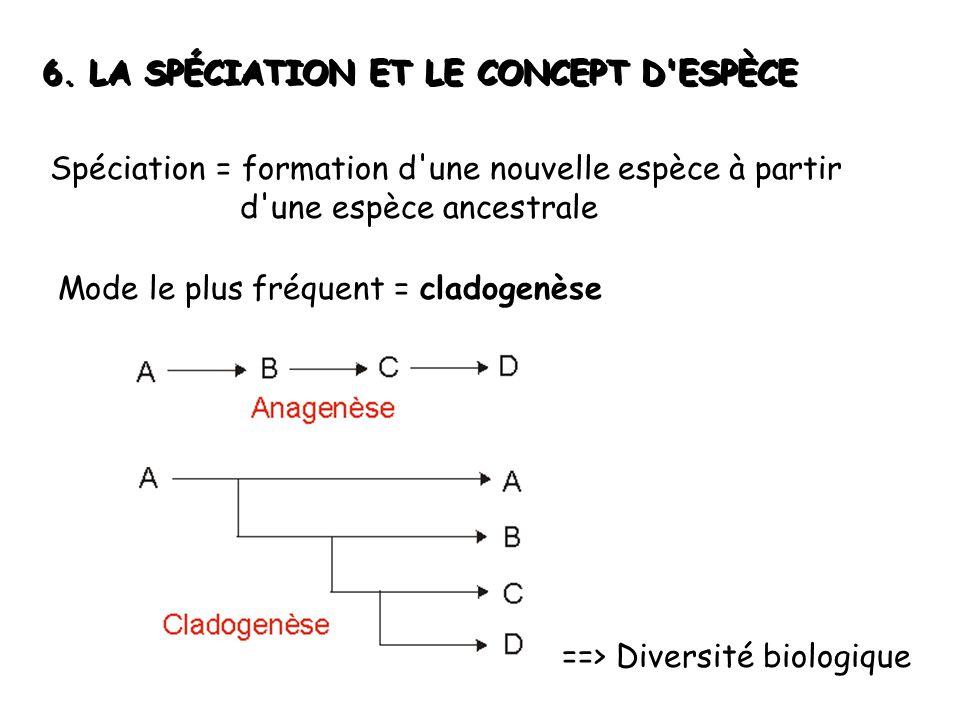 6. LA SPÉCIATION ET LE CONCEPT D'ESPÈCE Spéciation = formation d'une nouvelle espèce à partir d'une espèce ancestrale Mode le plus fréquent = cladogen