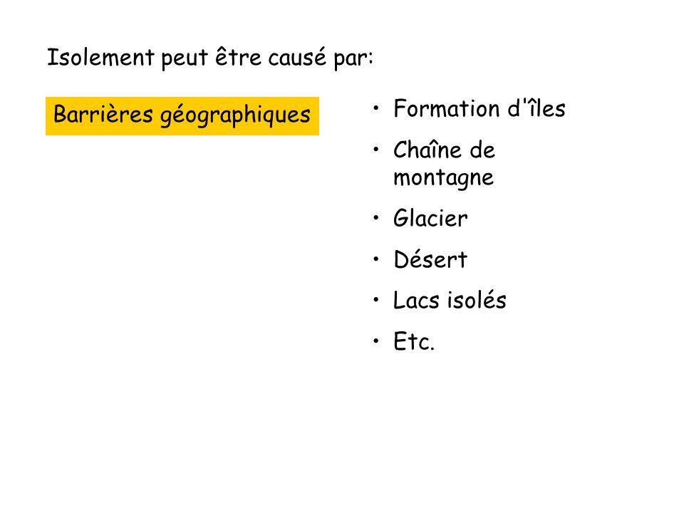 Isolement peut être causé par: Barrières géographiques Formation d îles Chaîne de montagne Glacier Désert Lacs isolés Etc.