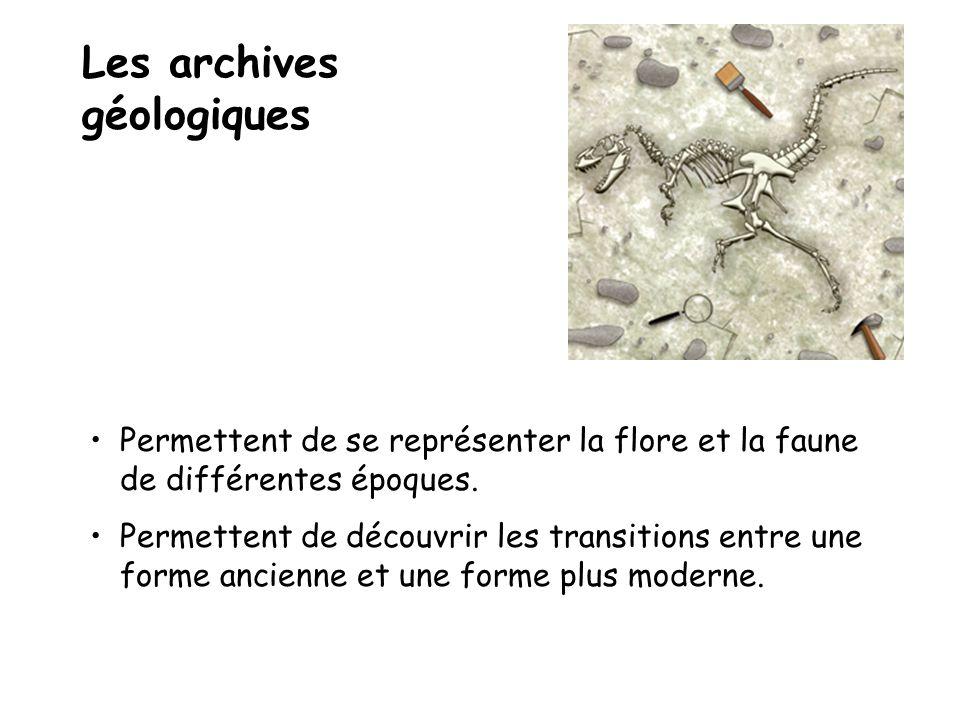 Les archives géologiques Permettent de se représenter la flore et la faune de différentes époques.