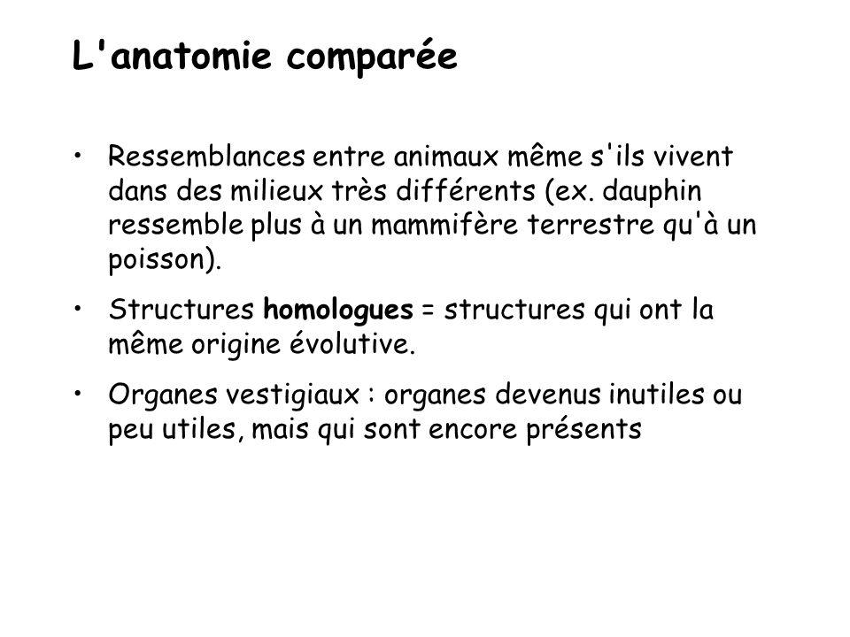 L anatomie comparée Ressemblances entre animaux même s ils vivent dans des milieux très différents (ex.