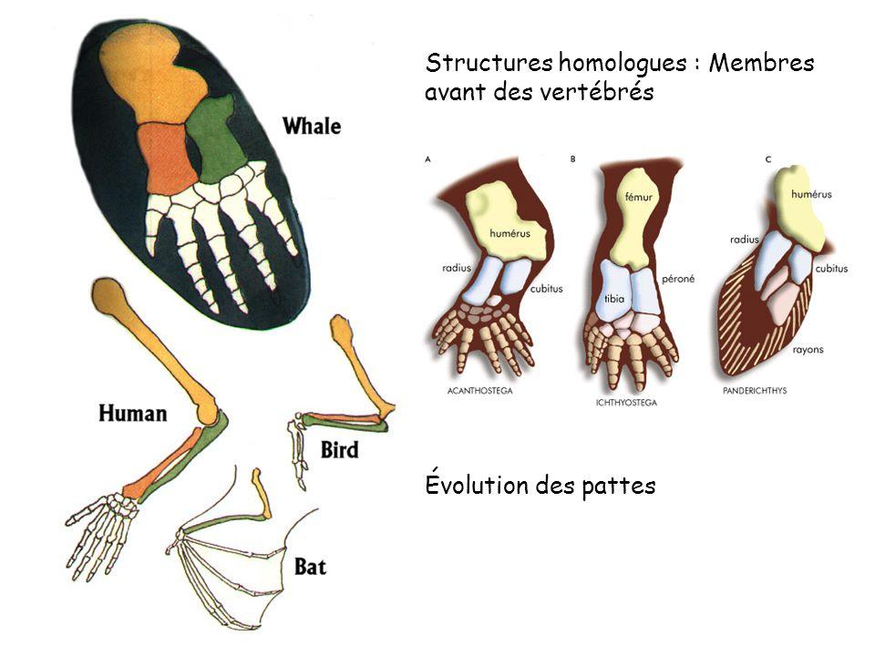 Structures homologues : Membres avant des vertébrés Évolution des pattes