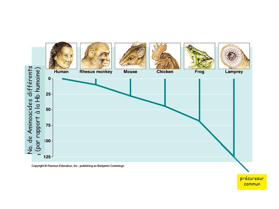 No. de Aminoacides différents (par rapport à la Hb humaine) précurseur commun