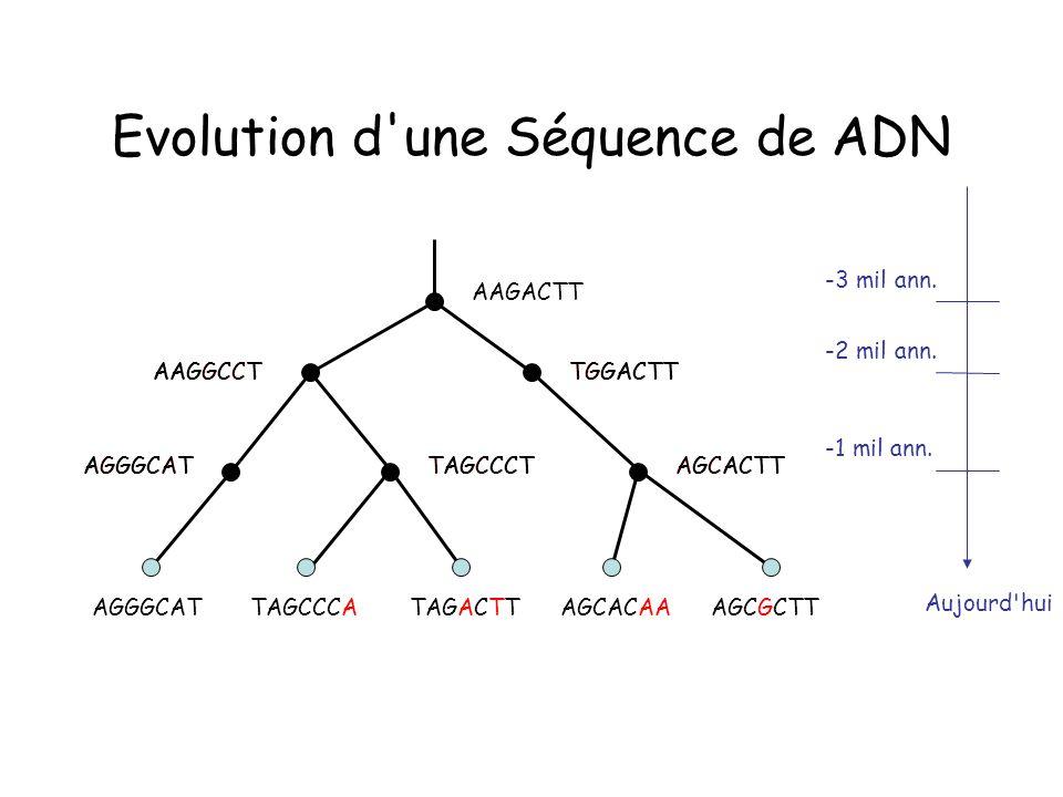 Evolution d une Séquence de ADN AAGACTT TGGACTTAAGGCCT -3 mil ann.