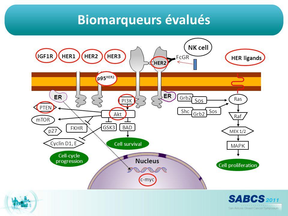 Biomarqueurs évalués ER Nucleus c-myc Raf MEK 1/2 MAPK Akt GSK3BAD Cell-cycle progression PTEN mTOR p27 Cyclin D1, E FKHR Grb2 Sos Cell survival Ras S