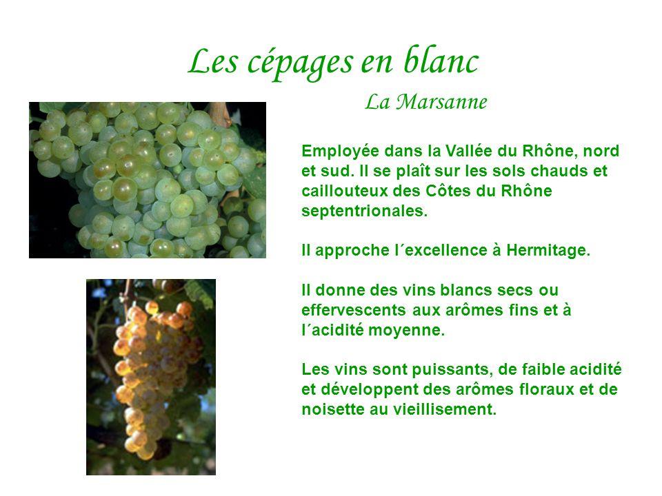 Les cépages en blanc La Marsanne Employée dans la Vallée du Rhône, nord et sud. Il se plaît sur les sols chauds et caillouteux des Côtes du Rhône sept