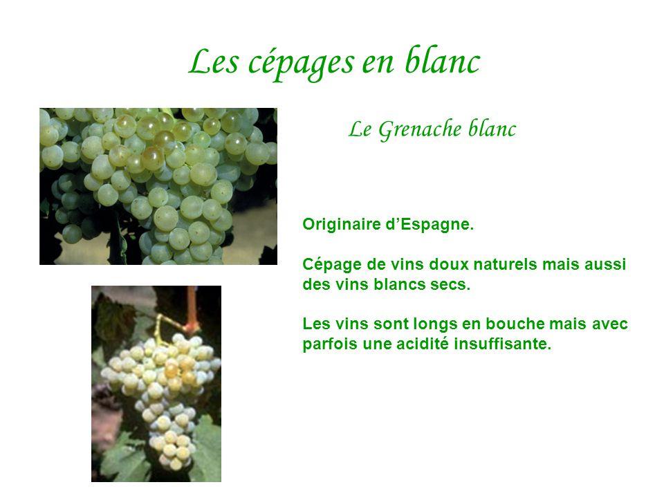 Les cépages en blanc Le Grenache blanc Originaire d'Espagne. Cépage de vins doux naturels mais aussi des vins blancs secs. Les vins sont longs en bouc