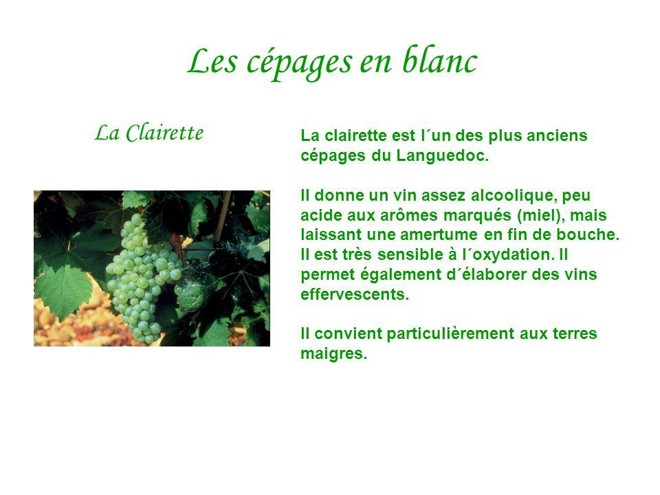 Les cépages en blanc La Clairette La clairette est l´un des plus anciens cépages du Languedoc. Il donne un vin assez alcoolique, peu acide aux arômes