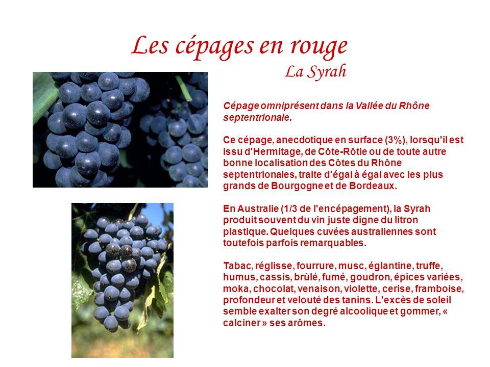 La Syrah Cépage omniprésent dans la Vallée du Rhône septentrionale. Ce cépage, anecdotique en surface (3%), lorsqu'il est issu d'Hermitage, de Côte-Rô