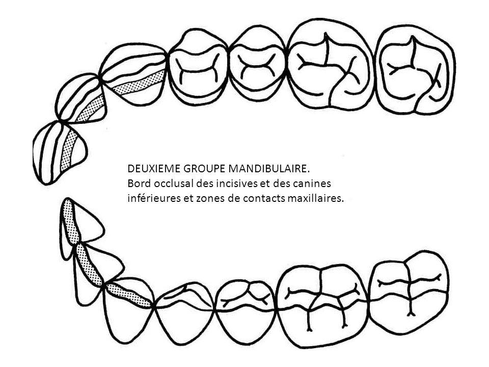 DEUXIEME GROUPE MANDIBULAIRE. Bord occlusal des incisives et des canines inférieures et zones de contacts maxillaires.