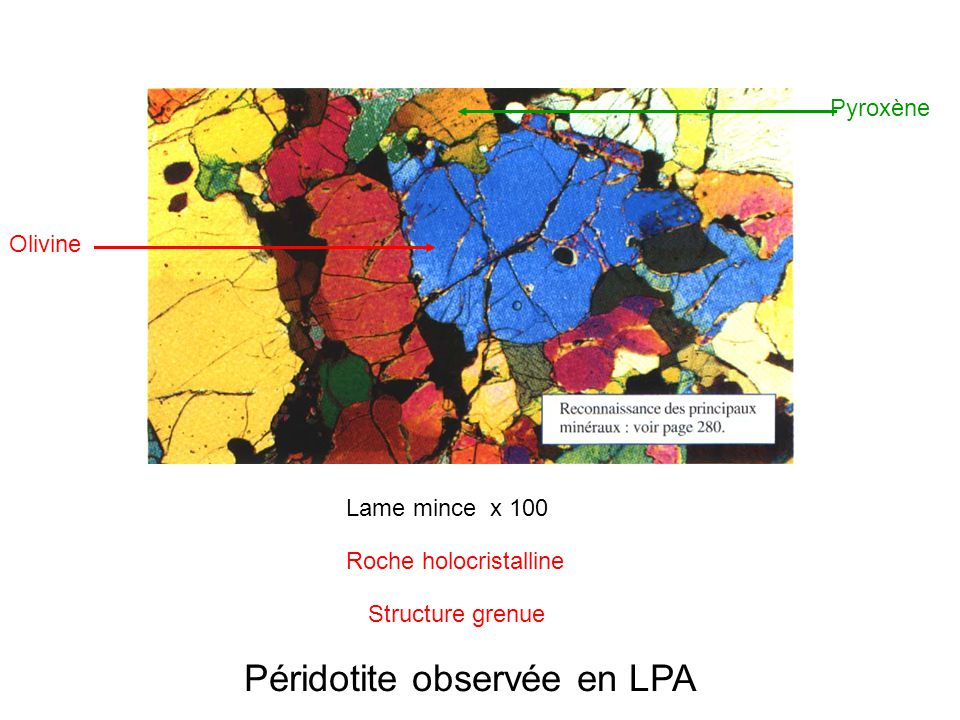 Péridotite observée en LPA Olivine Pyroxène Lame mince x 100 Roche holocristalline Structure grenue