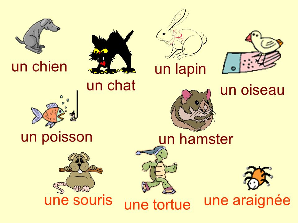 As-tu un animal Jeudi 11 janvier 2007 Objectives: talking about pets. Use jai