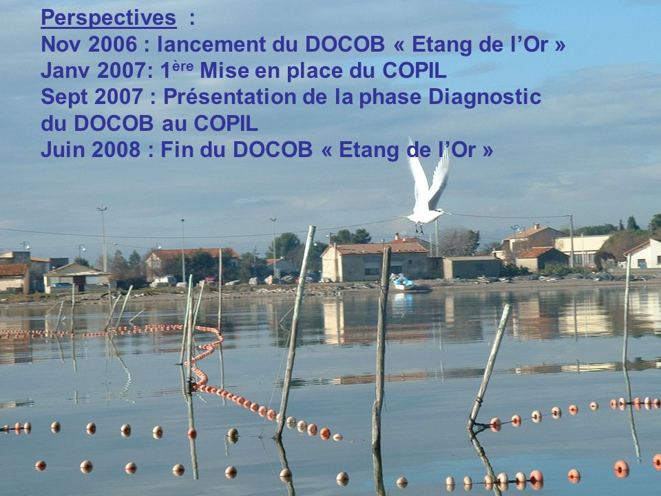 Perspectives : Nov 2006 : lancement du DOCOB « Etang de lOr » Janv 2007: 1 ère Mise en place du COPIL Sept 2007 : Présentation de la phase Diagnostic du DOCOB au COPIL Juin 2008 : Fin du DOCOB « Etang de lOr »