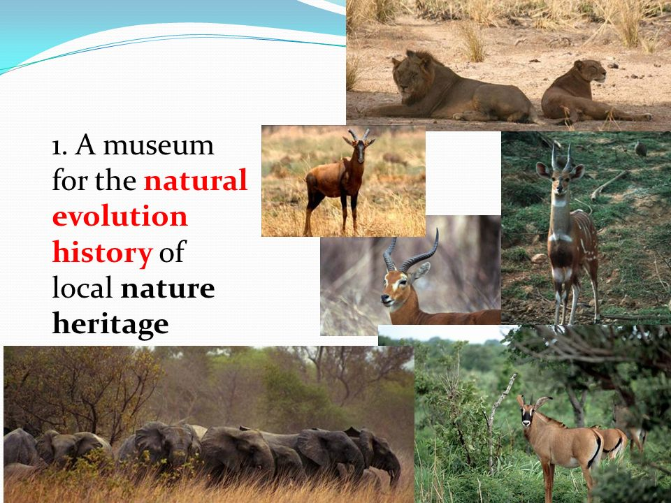 1. A museum for the natural evolution history of local nature heritage