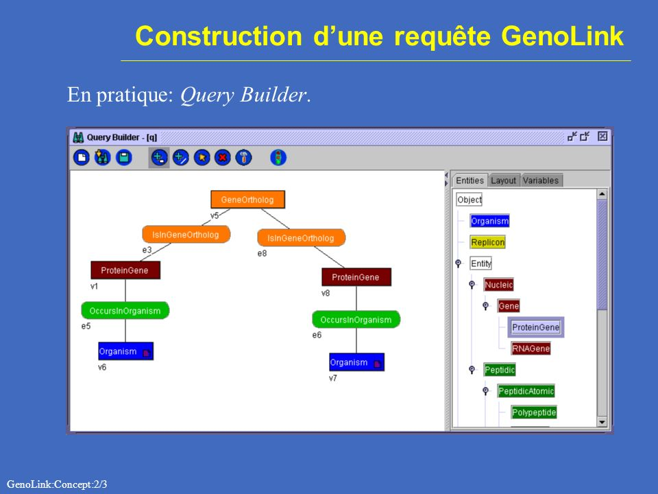 Construction dune requête GenoLink GenoLink:Concept:2/3 En pratique: Query Builder.