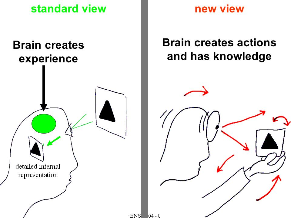 Master ENS 2004 - ORegan Brain creates actions and has knowledge standard viewnew view Brain creates experience