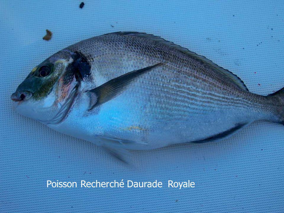 Formation d'un Havrais à la pêche de la Daurade Royale. - ppt ...