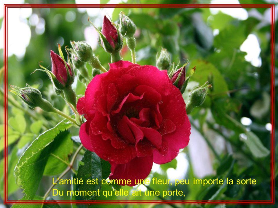 Musique A Rieu Memory Photos Et Realisation Bebertchi L Amitie