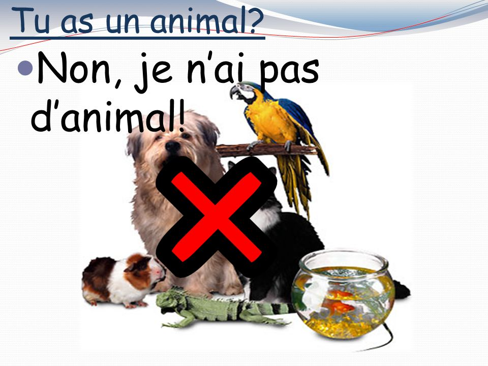 Tu as un animal Oui, jai une tortue