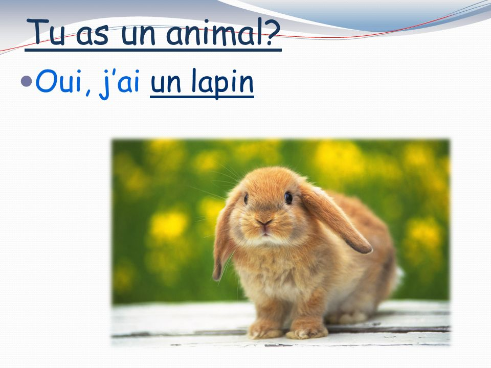 Tu as un animal Oui, jai un chien