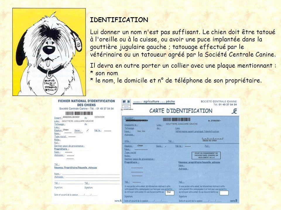 centrale canine nom de chien
