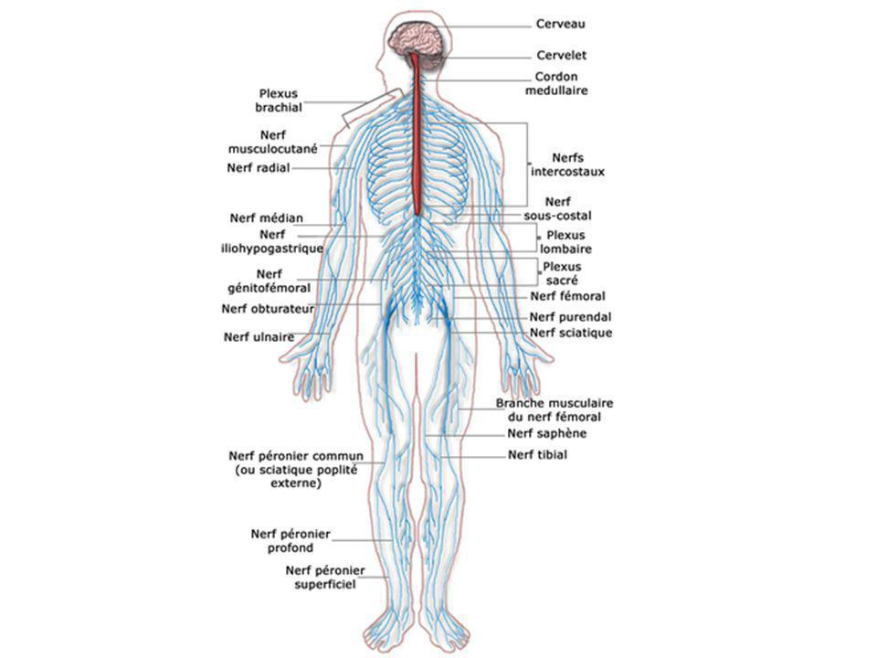 Ziemlich Anatomie Systeme Zeitgenössisch - Menschliche Anatomie ...