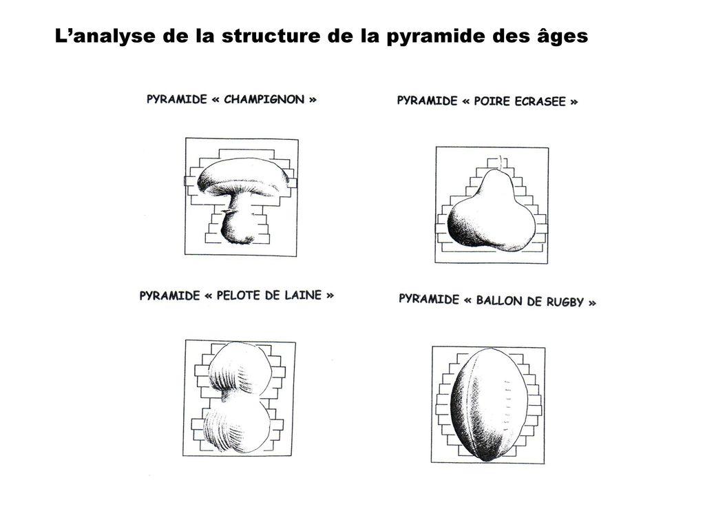 forme pyramide des ages pelote de laine