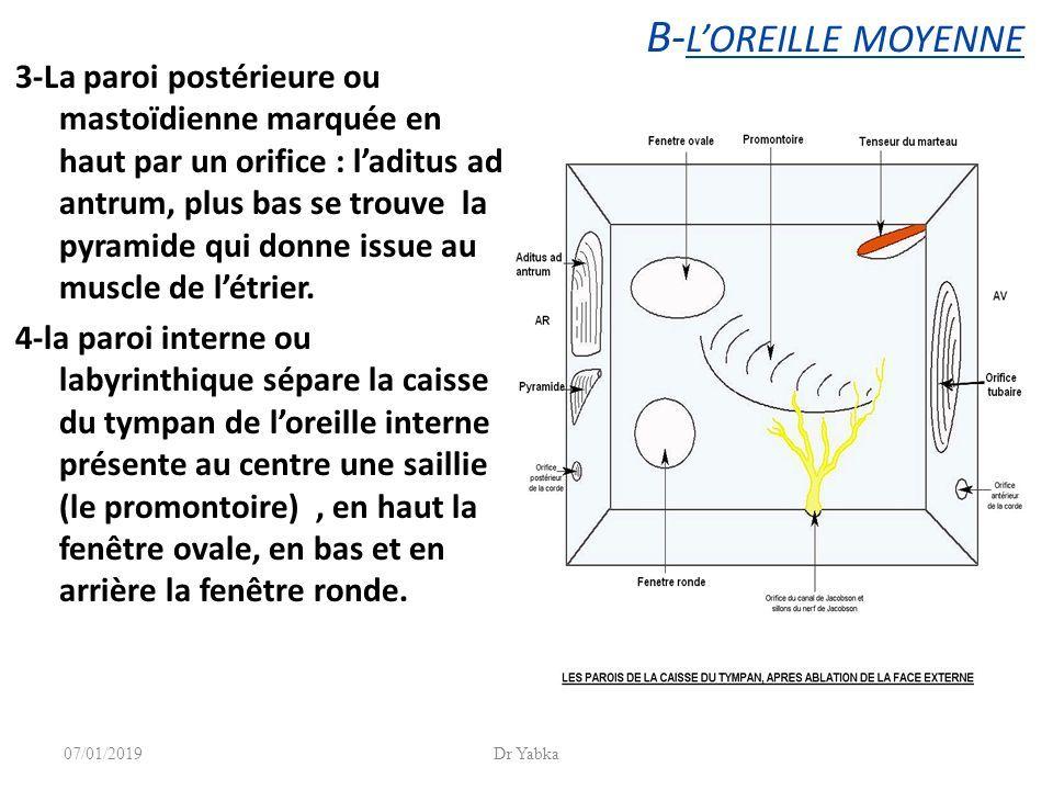 Loreille Et Le Nerf Auditif Dr Yabka 07012019dr Yabka Ppt